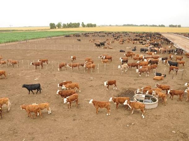 aguadas para ganado bovino