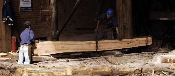 aserradero de madera blanda