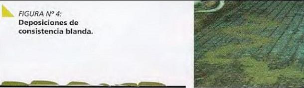 lecheria - monitoreo de la bosta - imagen 4