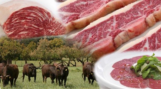 produccion bovina en argentina