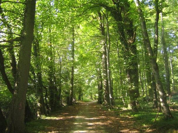 forestacion - el futuro de los bosque nativos