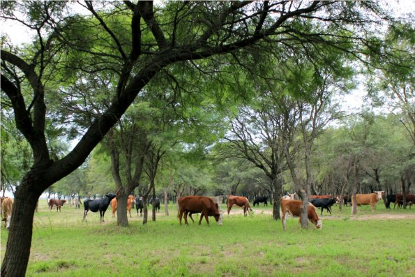 ganaderia manejo del ganado vacuno instalaciones rurales